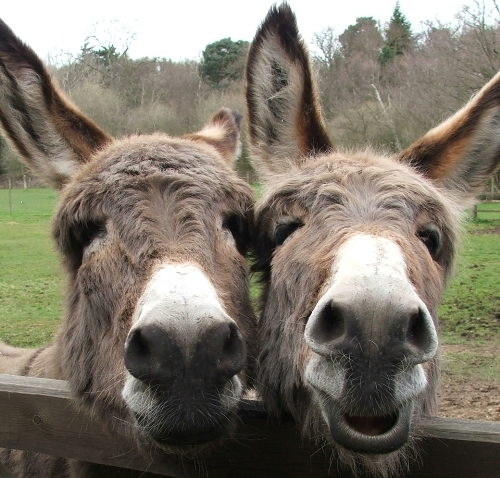 donkey_friends
