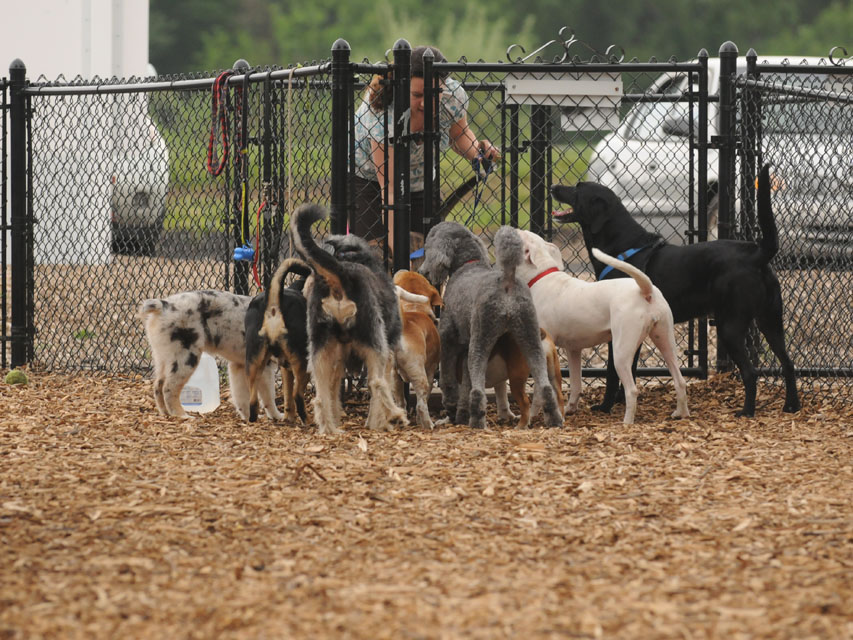 The greeting party at the Enfield Dog Park
