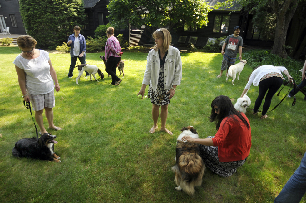 FARMINGTON 06/21/13 Cherry Kurlick, (center) of Winsted, offers a tennis ball to Wilson (left) her daughter's Australian sheep dog, during a dog/owner look alike contest at Keiler advertising agency Friday morning.  CLOE POISSON|cpoisson@courant.com