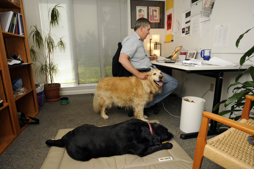 FARMINGTON 06/21/13 John Brody, of Darien, pats one of his dogs, Ginger, while Ringo takes a nap on the floor in Brody's office at Keiler advertisting agency during Take Your Dog to Work Day.