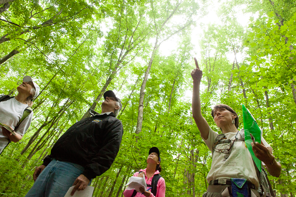 2013.06.10 - Middlefield, CT - Naturalist Lucy Meigs of Durham (right) identifies trees for Durham residents (from left to right) Annette Olma, Terry Olma and Amy Moore during a hike that Meigs led through Wadsworth Falls State Park. Photograph by Will Parson | wparson@courant.com