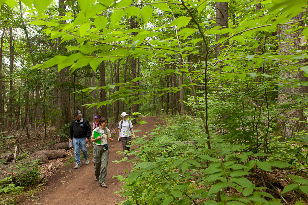 2013.06.10 - Middlefield, CT - Naturalist Lucy Meigs of Durham (front) identifies trees and other wildlife while leading a hike through Wadsworth Falls State Park. Photograph by Will Parson | wparson@courant.com