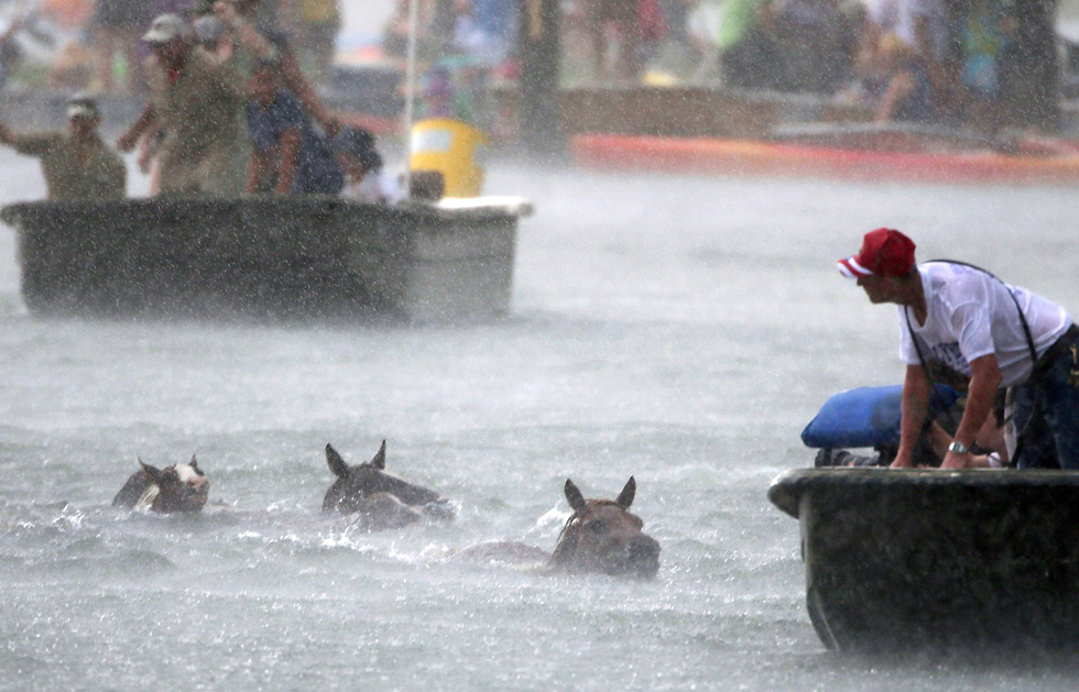 Wild ponies cross the Assateague Channel, in a rain storm, under the watchful eyes of volunteers who make sure they cross safely.  (Photo by Mark Wilson/Getty Images)