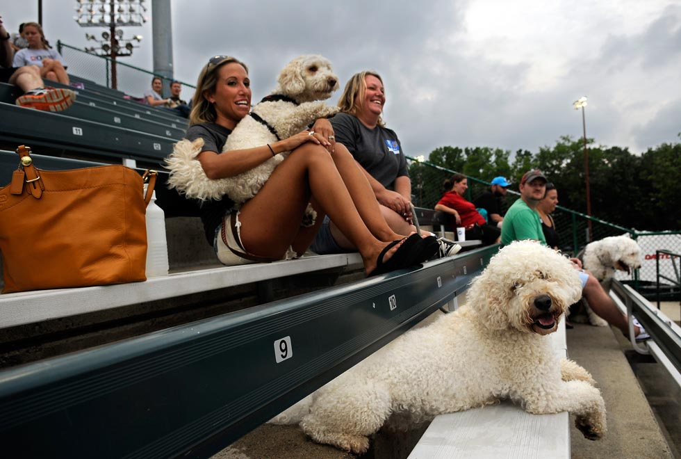 "Dana Marzec holds onto Jackson as he starts to bark at the Rock Cats mascot walking through the stands at the annual ""Bark in the Park"" event at Rock Cats Stadium Monday evening. Cooper, Jackson's brother, seems to enjoy the view from under the bench as his owner lana Dube shares in the laughter. All are from Southington."