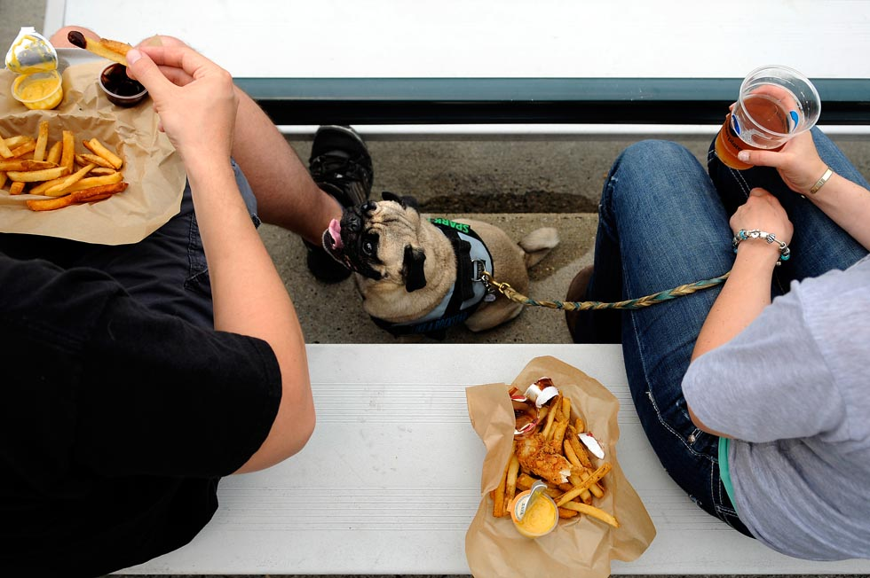 "It's tough to be short but Turbo, a Pug, doesn't seem to mind much as he stares up at his owner Chris St. Mary during the annual ""Bark in the Park: event at Rock Cats Stadium Monday evening which encourages fans to bring their dog to the ball game."