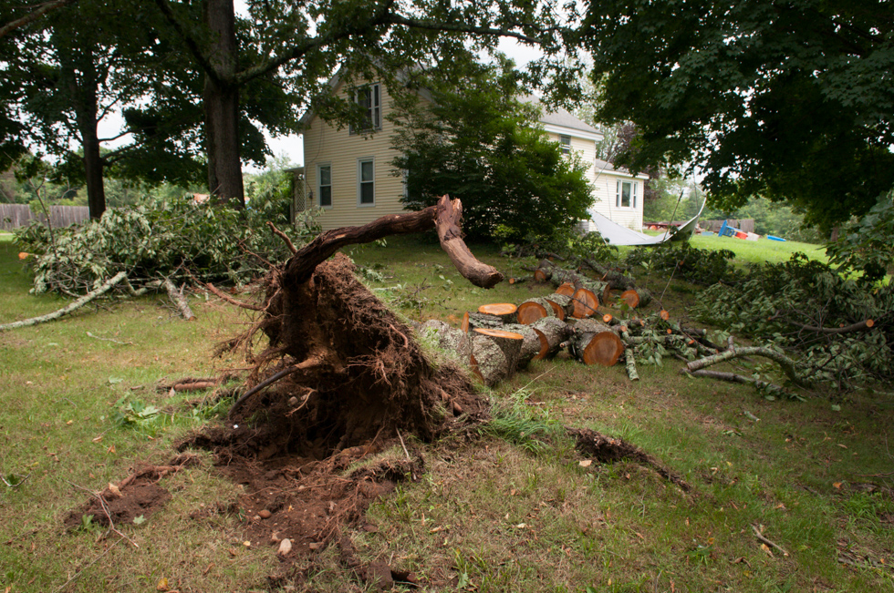 2013.07.11 - Coventry, CT - A large tree fell over at the home of Stacie Fluckiger in Coventry when a possible tornado ripped through the area on Wednesday evening. Officials from Coventry and the National Weather Service surveyed storm damage in Coventry on Thursday. Photograph by Will Parson | wparson@courant.com