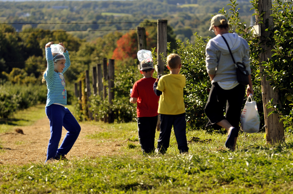 Emma Woodward, 9, adjusts her picking bag as she and her brother Luke, 8, wear them as hats while picking apples at Apple Johnny Appleseed's Farm in Ellington Monday afternoon with their brother Matthew, 6, and mom Mary Pat. The Woodward's are from Vernon and have been visiting the farm for apple picking for the past 10 years. The Picking orchard is open Monday through Sunday 9-5 weather permitting.