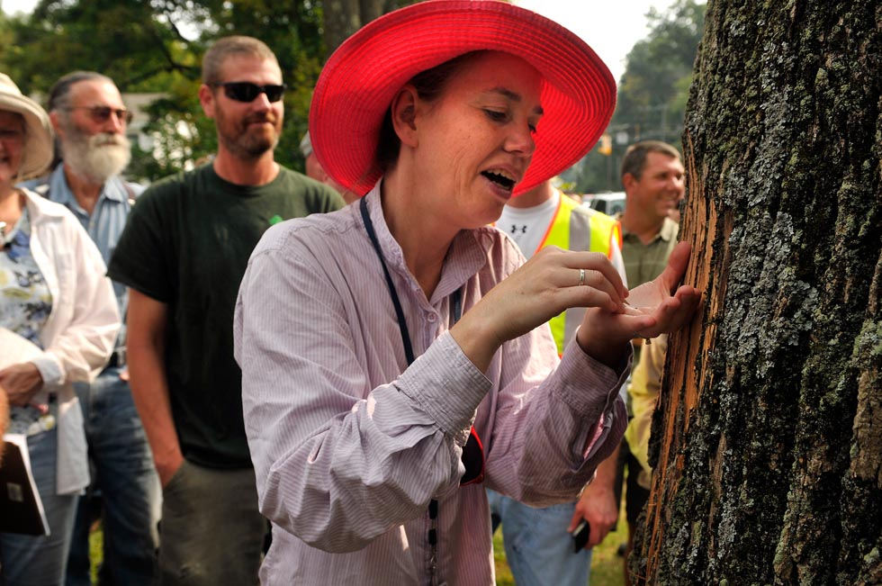 Claire Rutledge, with the Connecticut Agricultural Experimental Station in New Haven, extricates part of an emerald ash borer insect (the tiny spec in her hand) as State environmental officials, arborists, tree wardens, foresters and other tree service personnel look on in an area of Naugatuck that is infested with the insect.