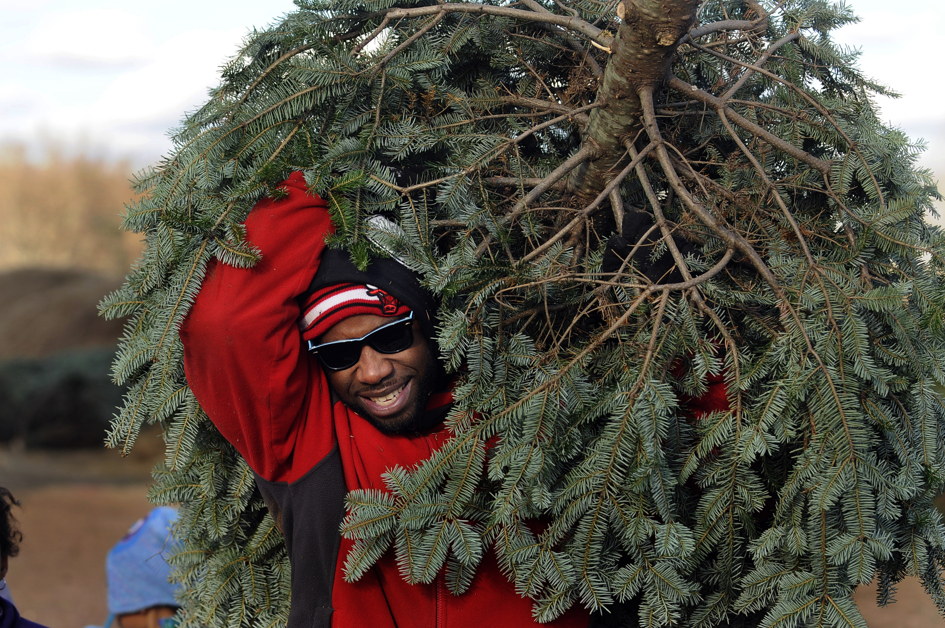 SOMERS 11/29/13 Allen Deronsle, of Vernon, carries a Christmas tree he and his family cut at Hemlock Hill Christmas tree farm in Somers Friday. Deronsle has been cutting a tree at the farm for the past eight years.  CLOE POISSON|cpoisson@courant.com
