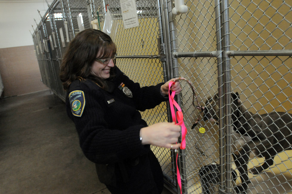 Manchester Animal Control Supervisor Elease McConnell holds out a leash to one of the dogs at the Tyler Regional Animal Care Shelter Jan. 2. Manchester Animal Control is ramping up its efforts to help get its found animals into homes. To do that, animal control officers advertise constantly through social media. They also need the support of the community through food donations and eventual adoptions. The Tyler Regional Animal Care Shelter is a tri-town kennel that East Hartford and South Windsor also use.