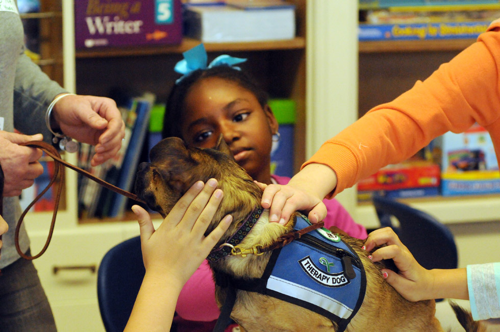 Nyasia Walker, 9, a fourth grade student at Chamberlain School, New Britain, at center, looks at Yoda, a Newtown Strong Therapy Dog, while others pet him Friday morning at the school. His owner is Terry O'Neil, of Newtown, at left. The Chamberlain Student Council has been fundraising for community organizations recently, and was researching service animal groups which might benefit from a fundraiser when they learned about Newtown Strong Therapy Dogs. The group was founded to bring comfort and strength to the community after the Newtown tragedy.