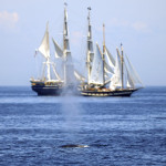 Whale of a Sail: The Charles W. Morgan's 38th Voyage