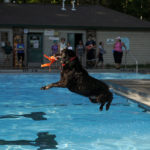 3rd Annual Pooch Plunge
