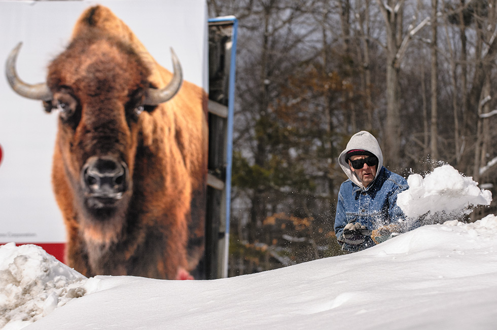 "03.02.2015 - Mansfield, Ct.  - ""We used to play on it as kids. My brother tried to get me to jump off it with an umbrella,"" says Bruce Potter, 77, shoveling snow in his driveway in front of a billboard featuring a buffalo. The billboard frame, he says, has been next to his residence since before, my dad built the home in 1927. ""They tell me I'm too old to be out here but, what the hell, you gotta die somehow."" The week's forecast calls for temperatures climbing into the 40's by midweek with a chance of rain on Wednesday. Photograph by Mark Mirko 