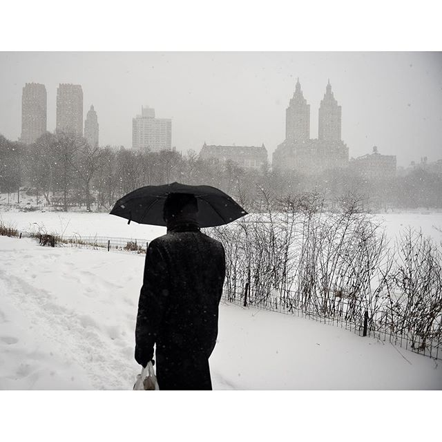NEW YORK, NY - JANUARY 23: A man walks in heavy snow through Central Park on January 23, 2016 in New York City. A major Nor'easter is hitting much of the East Coast and parts of the South as forecasts warn of up to two feet of snow in some areas. (Photo by Astrid Riecken/Getty Images)