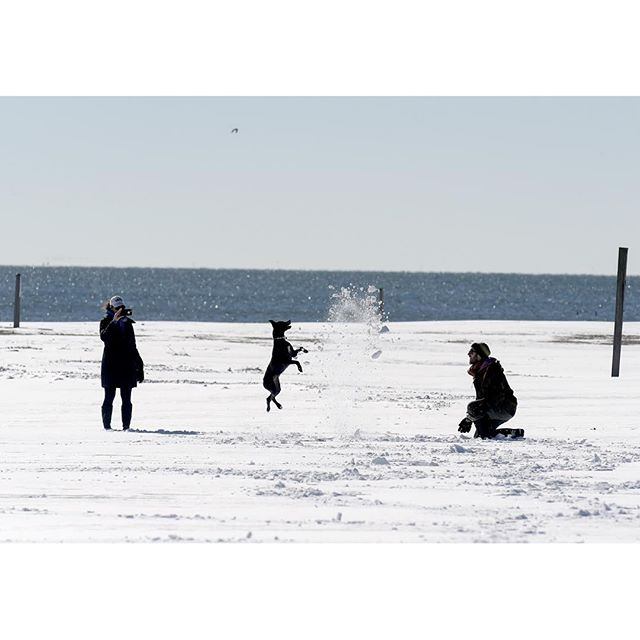At Silver Sands State Park in Milford on Sunday, Jordan (from left) and her husband AdrianFischer, of Milford, play with Suki, their one-year-old chocolate lab mix, as she leaps at the fresh snow generated by Adrian.  PATRICK RAYCRAFT | praycraft@courant.com